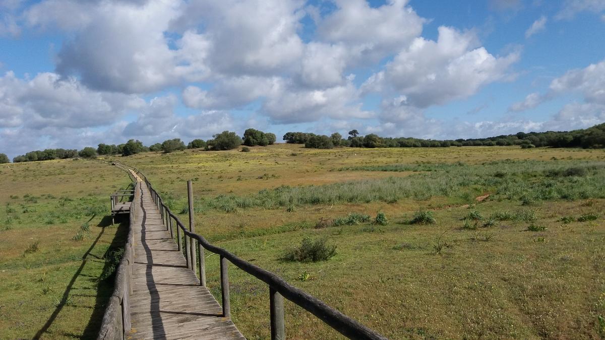 Doñanako parke naturala - 20
