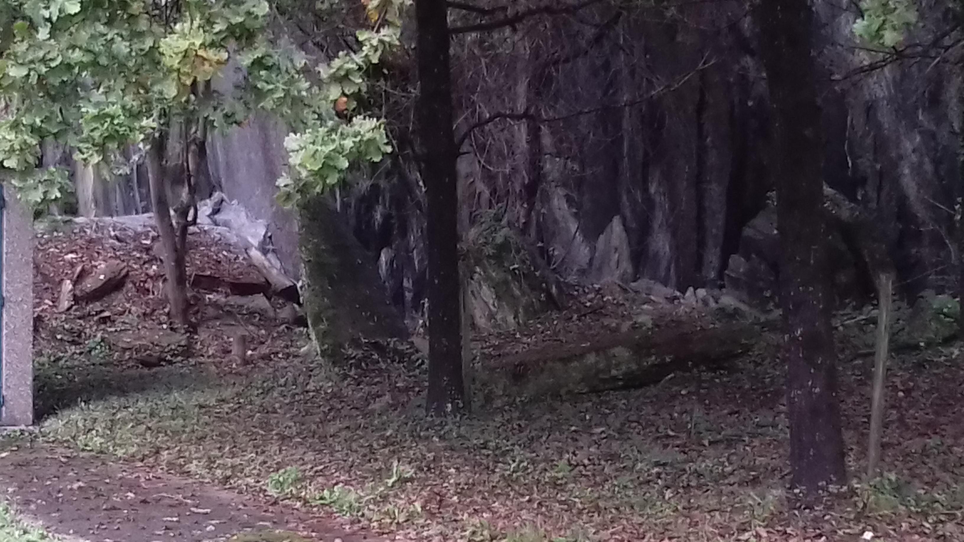 """""""Eibarko harlauza"""""""